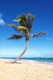 夏のカリブ海のビーチで孤独なヤシの木
