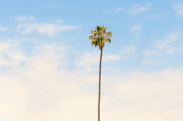 Одинокая пальма на фоне голубого неба