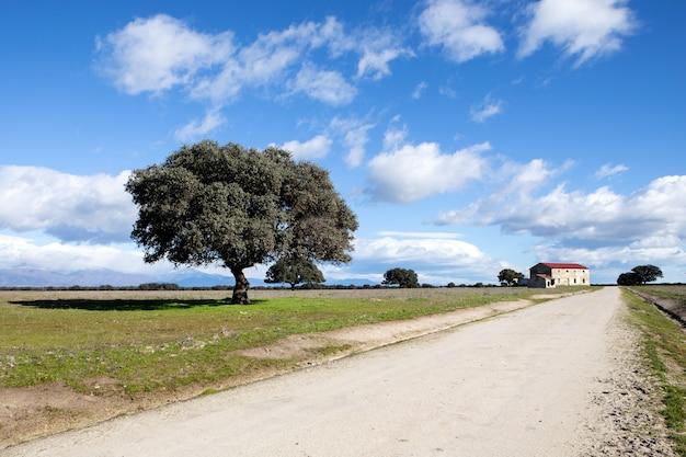 美しい空の下の田園地帯の真ん中にある孤独な小道