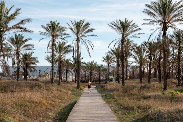 Lonely person walking on a boardwalk surrounded by palm trees
