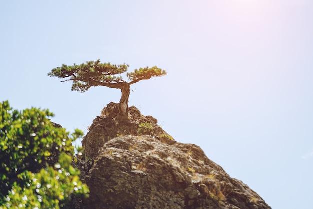 空の風景を背景に山の頂上に生える孤独な松