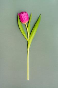 단색 어두운 배경에 녹색 잎 외로운 핑크 튤립. 공간을 복사하십시오. 세로보기