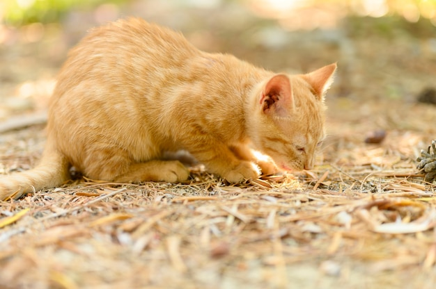 Lonely poor homeless ginger kitten on autumn leaves