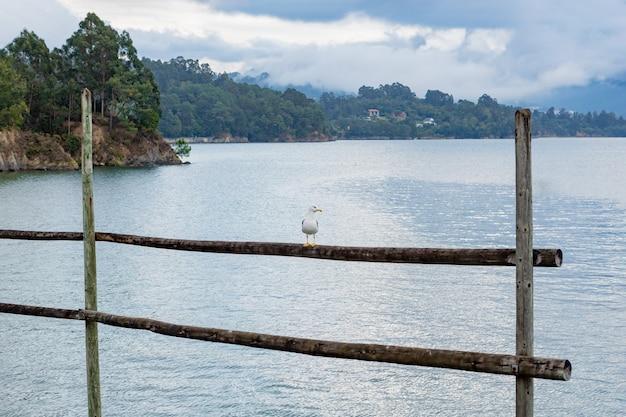 乾いた漁網に棒でとまる孤独なカモメ