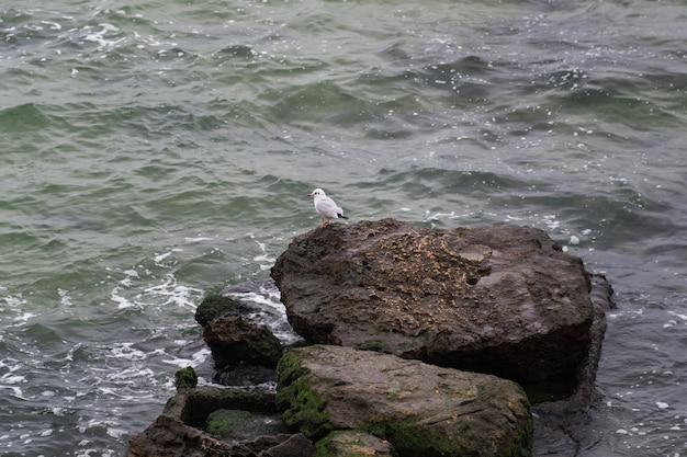 Одинокая чайка, стоящая на скале в море. холодное зимнее море.