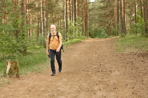 따뜻한가 날에 소나무 숲에서 산책하는 외로운 수석 남자. 혼자 산 숲에서 배낭 여행을하는 동안 배낭을 들고 여행 옷을 입고 수염 난 노인 유럽 남성 등산객의 전체 길이