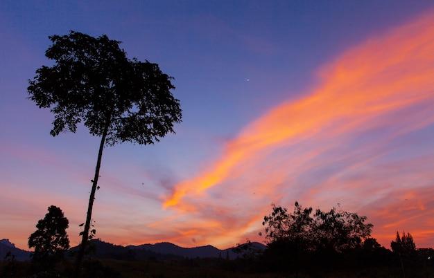Одинокое дерево силуэта на закате сумерек в тропическом лесу