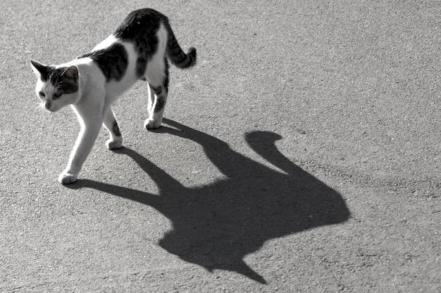 アスファルト道路に大きな影のある孤独な野良猫。黒と白のストックフォト