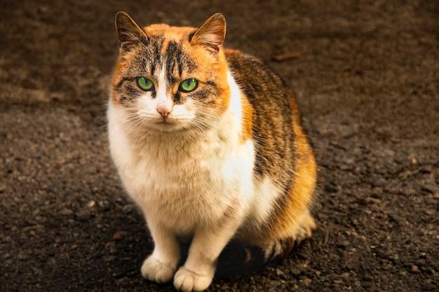 길거리에서 잡색의 머리카락을 가진 외로운 길 잃은 고양이