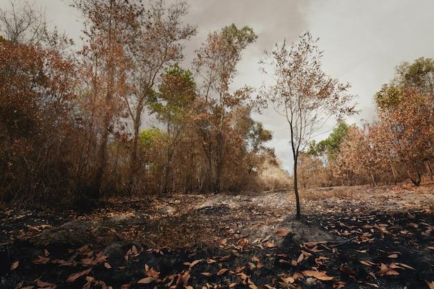 ほこりと灰の山火事の後の孤独な木。地球温暖化、森林保護、環境保護の概念