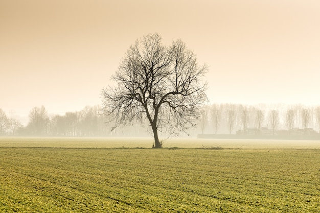 Lonely tree in an agricultural field in winter