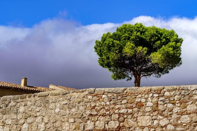 石垣のある公園の頂上にある孤独な木、暗い嵐の雲のある青い空。スペイン。