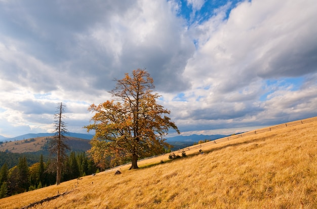 Lonely tree on autumn mountainside (and sky with fleecy clouds).