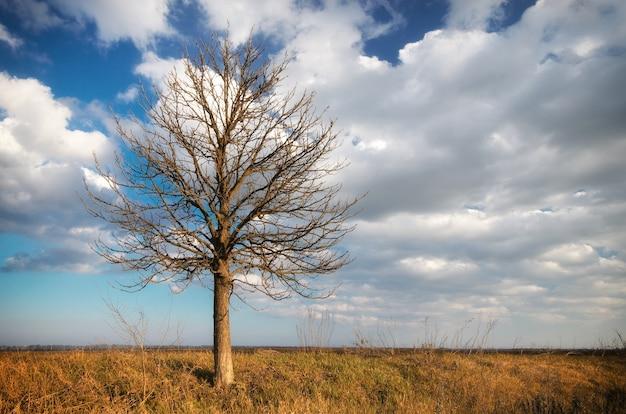 Одинокое дерево. композиция природы.