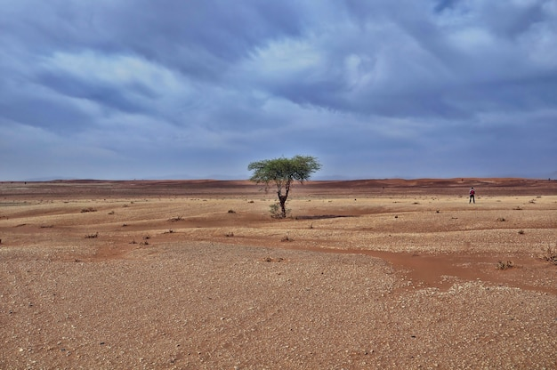 Lonely tree in a desert area under the breathtaking cloudy sky during daytime