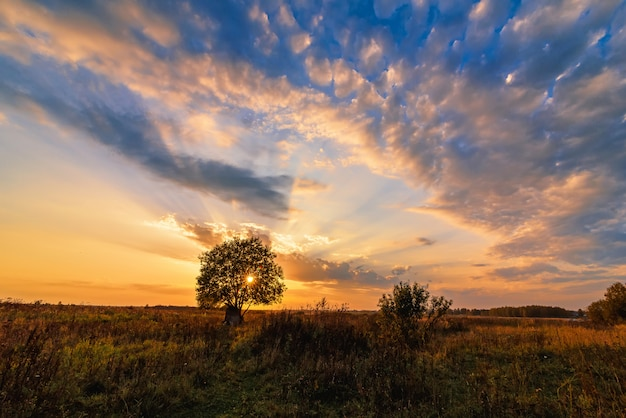 Lonely tree in a field against an orange sunset in autumn