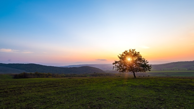 Lonely tree in field at sunset time