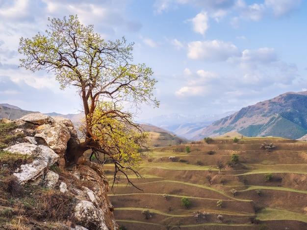 崖の上に生えている孤独な木。岩の上に生えている緑の木。