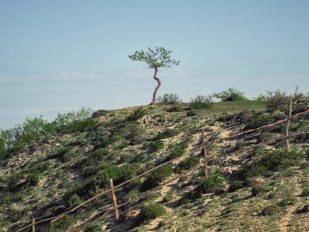 岩の上に生えている孤独な木。高地の牧草地。