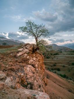 岩の上に生えている孤独な木。垂直方向のビュー。
