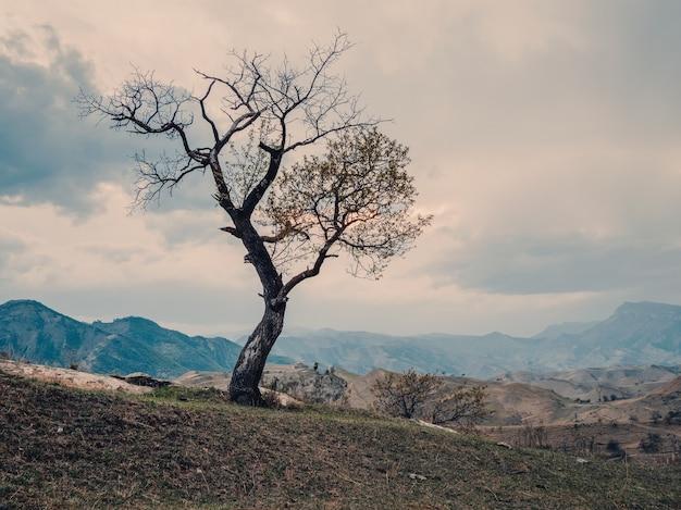 Одинокое дерево, растущее на вершине скалы.
