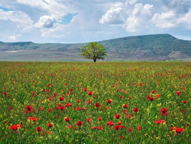 春のポピー畑の孤独な木。