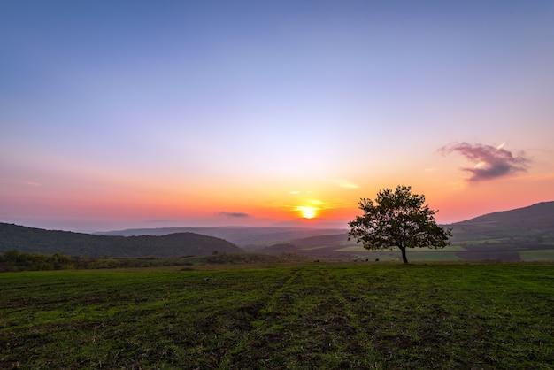 Одинокое дерево в поле во время заката