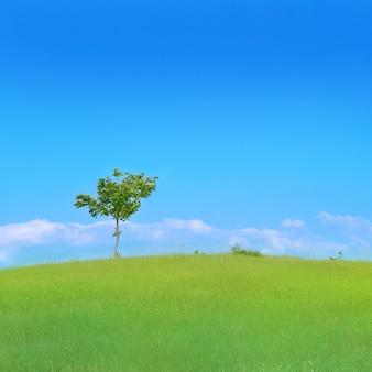 푸른 잔디와 푸른 하늘 분야에서 외로운 나무