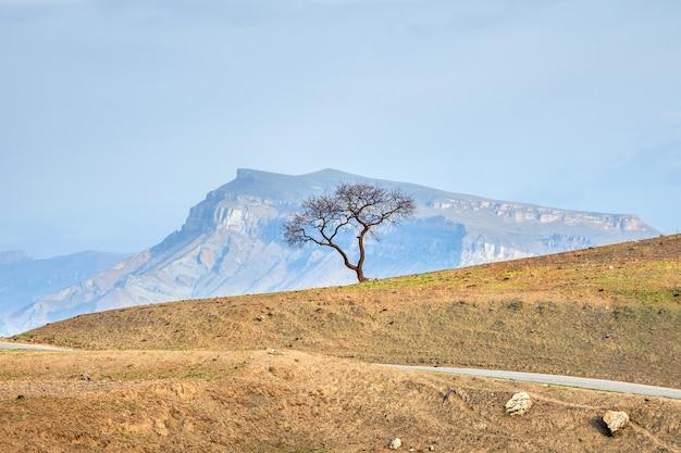 山の中の孤独な木。山の幾何学。