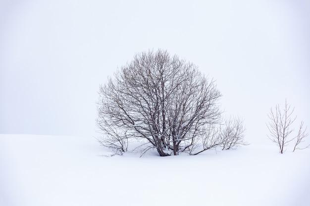 雪の中の孤独な木、美しい風景