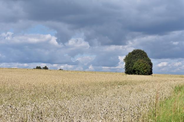 노란색 필드에 외로운 나무