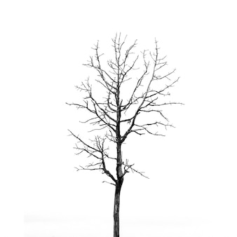 Lonely tree isolated on white