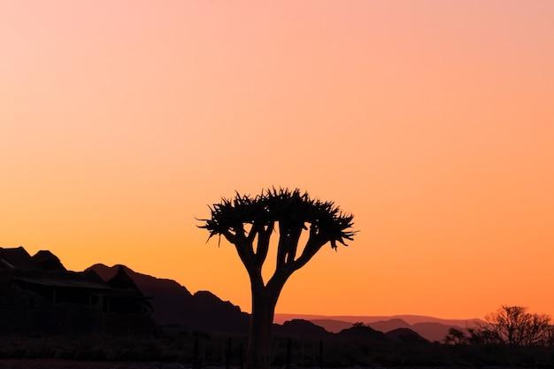 Одинокое дерево на фоне красивого заката в пустыне намиб