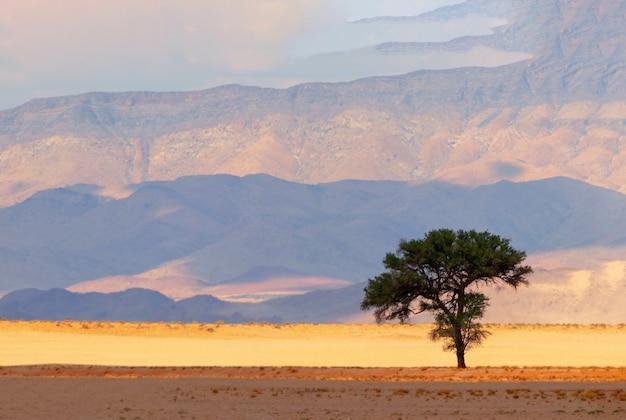 Одинокое дерево на фоне песка и гор в пустыне намиб Premium Фотографии