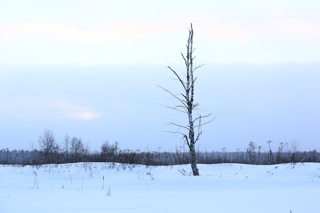Одинокое дерево на зимнем вечернем пейзаже