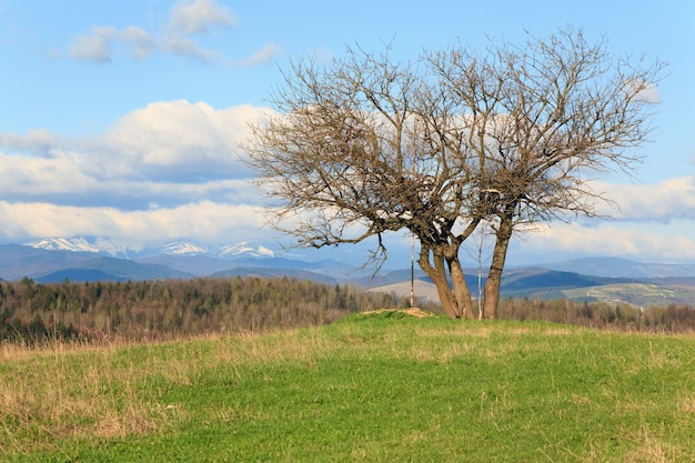 どんよりした空のbagroundの春の山の丘の孤独な木(カルパティア山脈、ウクライナ)