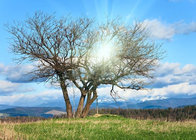 太陽の光が降り注ぐ空の春の山の丘にある孤独な木(カルパティア山脈、ウクライナ)。かなりのシャープネスのある合成写真。