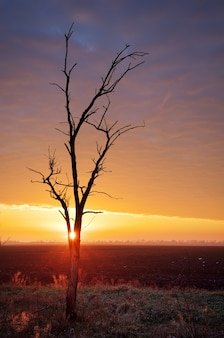 日没の孤独な木