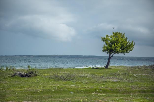 Одинокое дерево на пляже в темный день