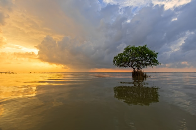 Lonely tree in sea