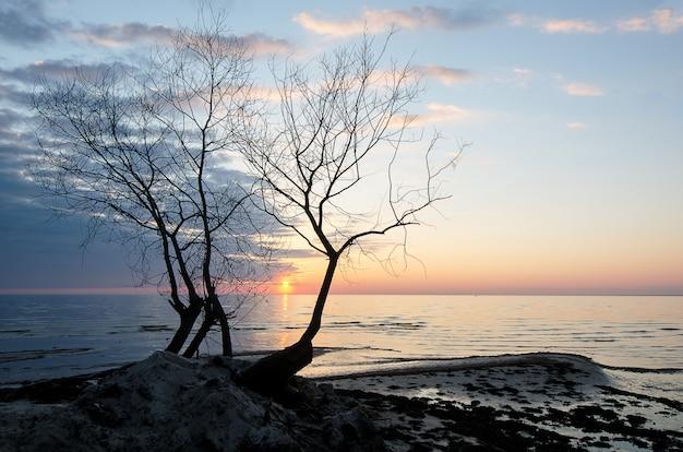 夕暮れ時の海沿いの孤独な木のシルエット。