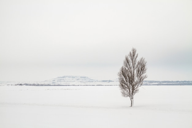 Lonely tree on a snow field with slagheap in the background