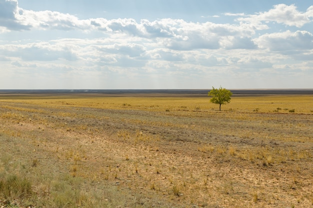 Lonely tree in the steppe of kazakhstan