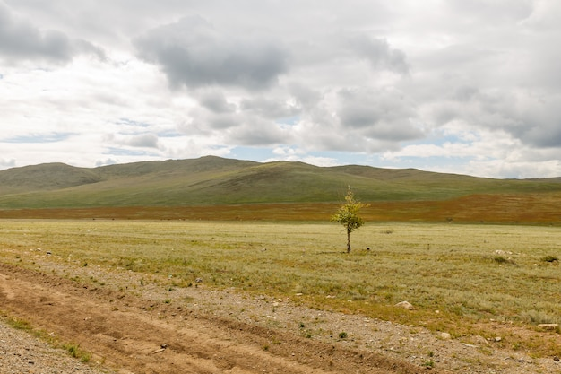 Lonely tree in the steppe