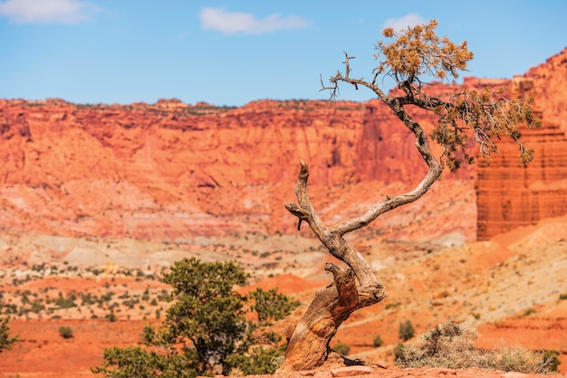 Lonely tree in utah