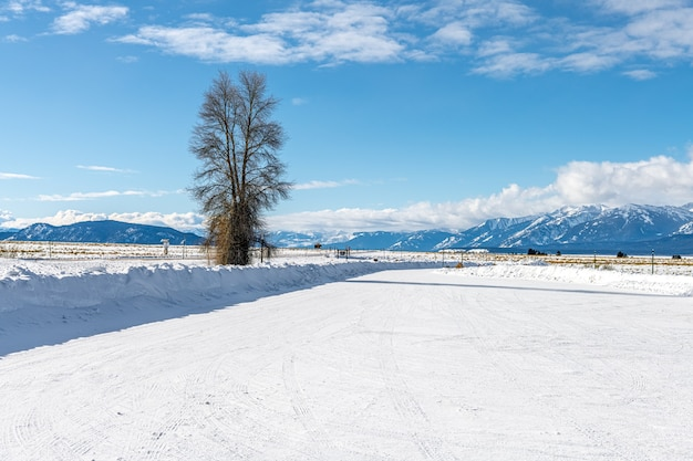 Lonely tree in winter landscape in the grand teton national park, wyoming