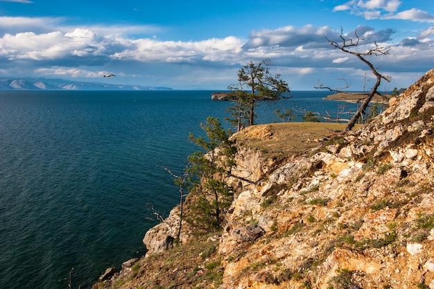 Одинокие деревья на высокой скале на берегу байкала. на горизонте горы. летящая птица чайка.