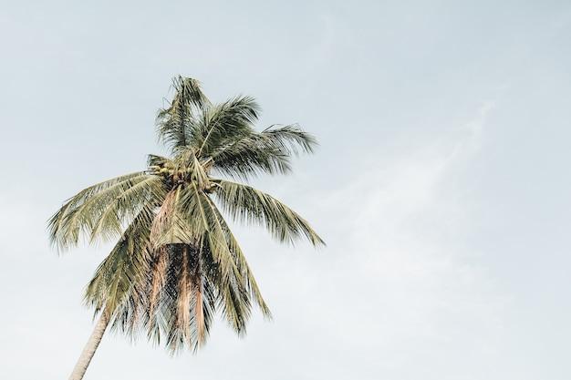 바람이 부는 날에 푸른 하늘을 배경으로 외로운 열대 이국적인 코코넛 야자 나무