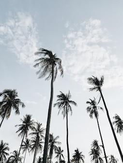 바람이 부는 날에 푸른 하늘을 배경으로 외로운 열대 이국적인 코코넛 야자수