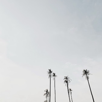 Одинокие тропические экзотические кокосовые пальмы на фоне голубого неба